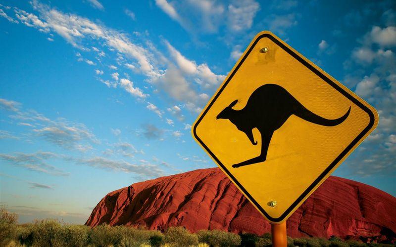 знак осторожно кенгуру